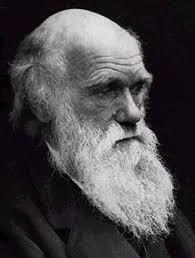 De evolutietheorie Charles Darwin
